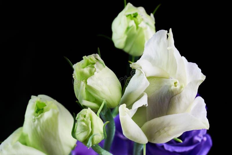 White eustoma flowers close up macro shot. White eustoma flowers close up macro shot stock images