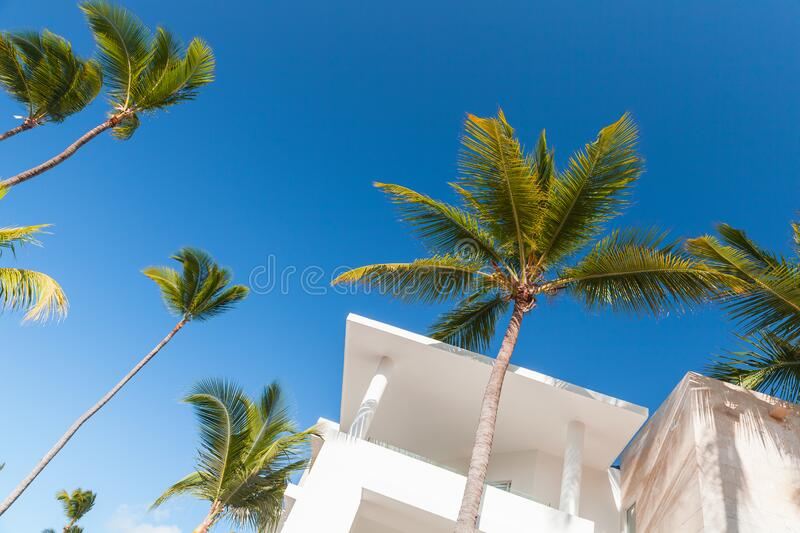 White exterior fragment and palm trees under blue sky. Abstract architecture background with white concrete exterior fragment and palm trees under blue sky at stock image