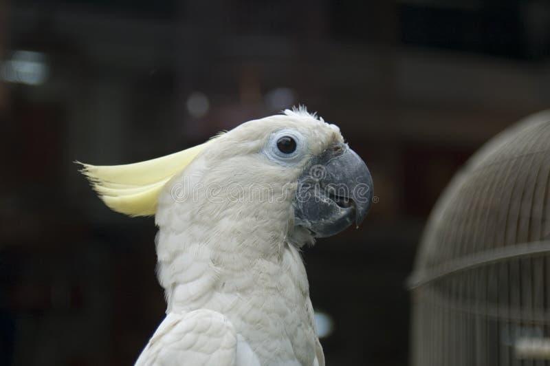 white för 4 papegoja royaltyfri fotografi
