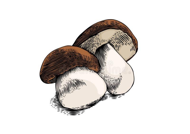 white för champinjoner två vektor illustrationer