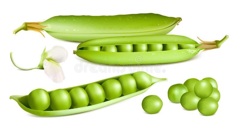 white för fröskida för ärtor för bakgrundskulor grön stock illustrationer