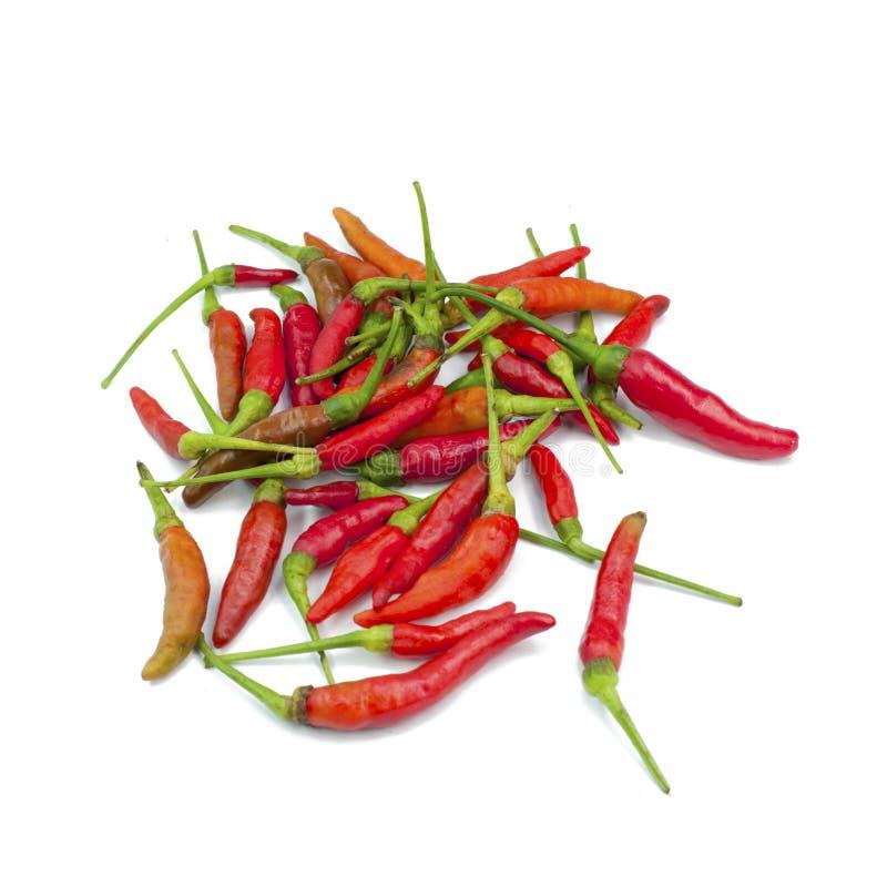 white för peppar för bakgrundschili varm isolerad röd royaltyfri fotografi