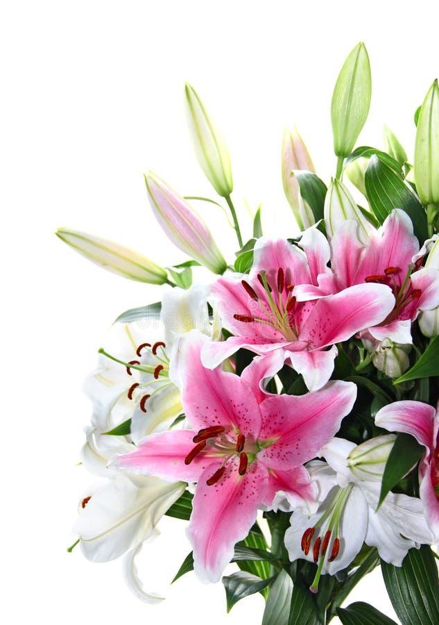 white för pink för bukettcloseuplilja royaltyfria bilder