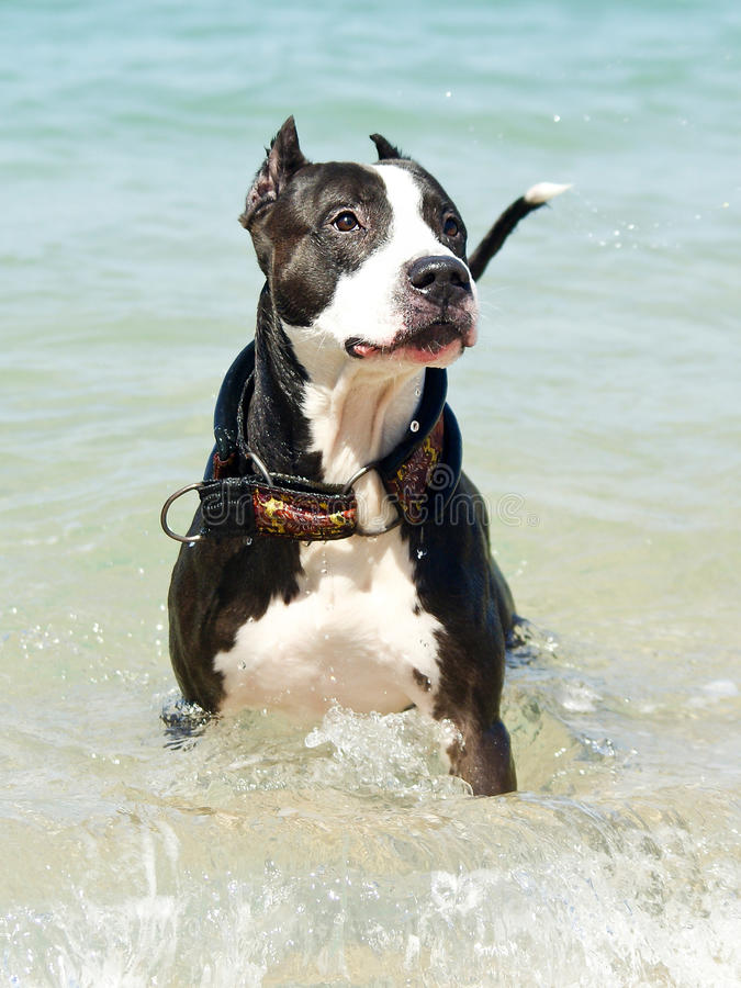 white för svart hund arkivbilder