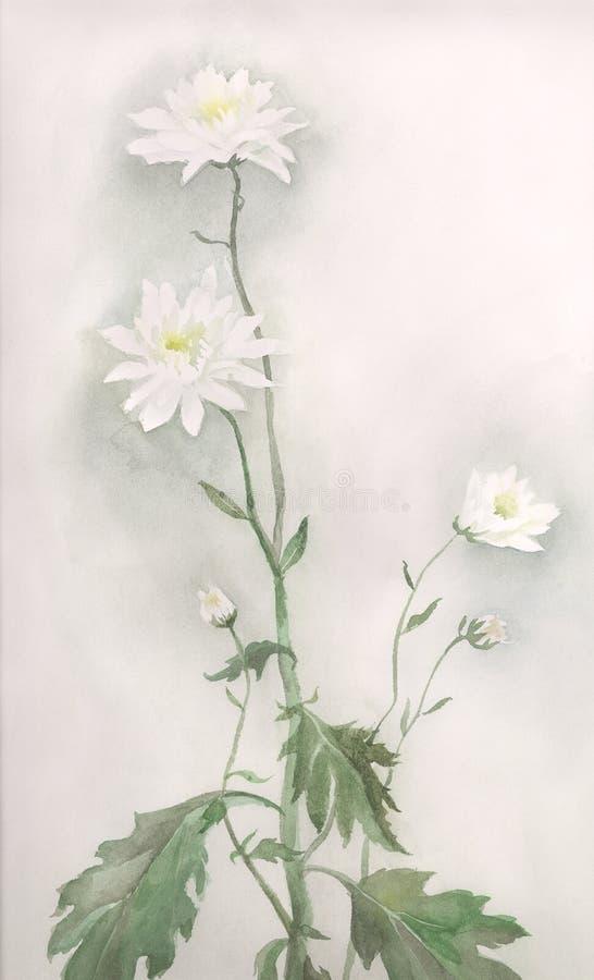 white för vattenfärg för chrysanthemumteckningsblomma vektor illustrationer
