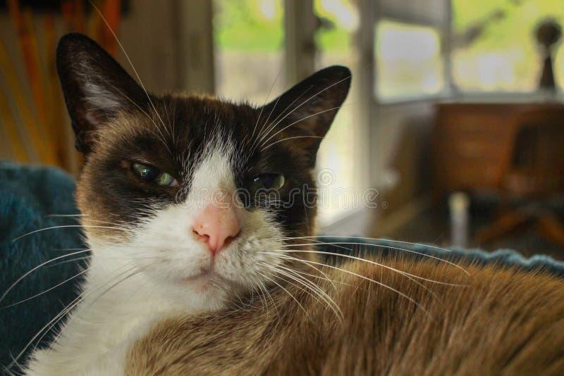 1 white för version för pott för svart färg för katt 2 rastrerade royaltyfri bild