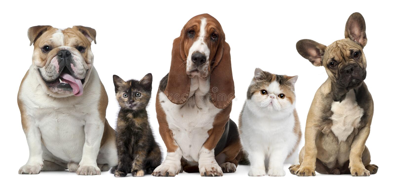white för främre grupp för katthundar arkivfoton