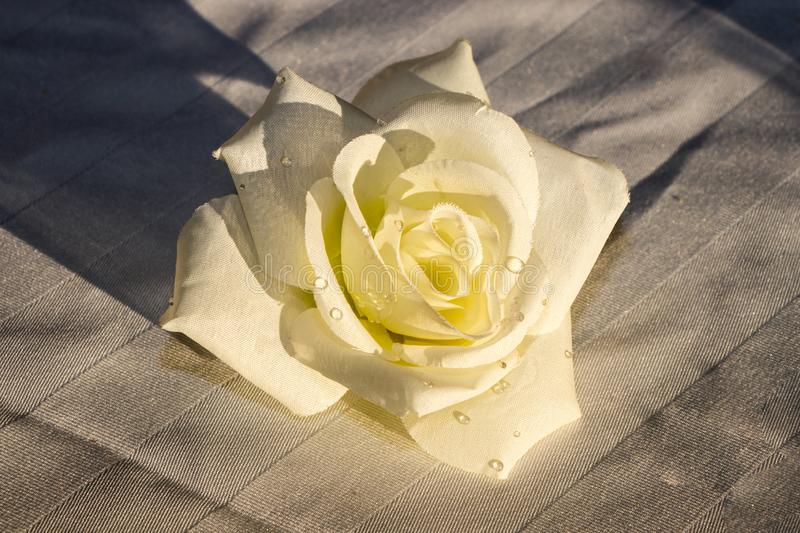 White fabric rose with drops of water on it. White fabric wedding rose laying on a table with water droplets on it royalty free stock image