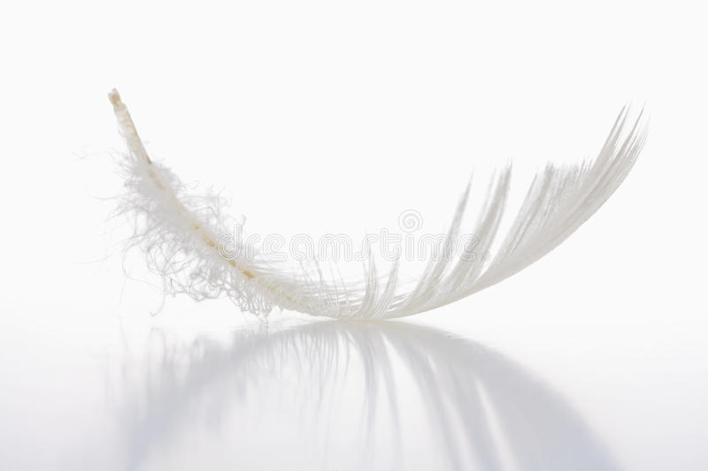 Download White feather stock photo. Image of white, single, float - 11767838