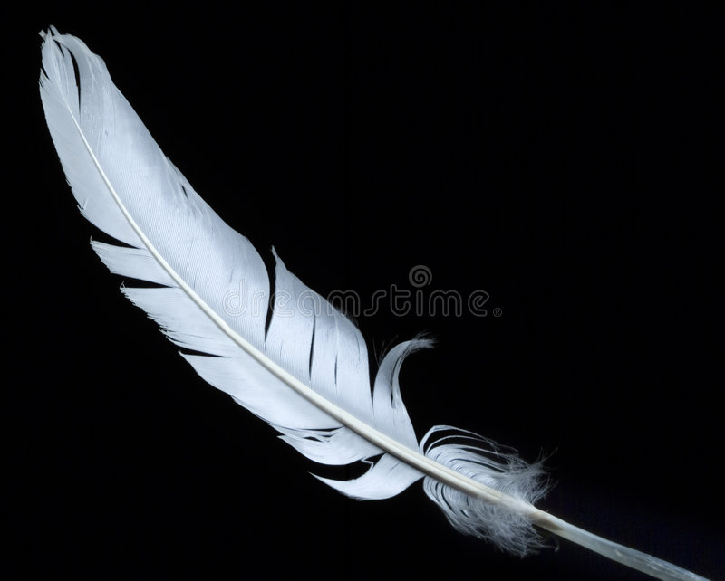 Download White feather stock image. Image of single, fragile, tenderness - 1346313