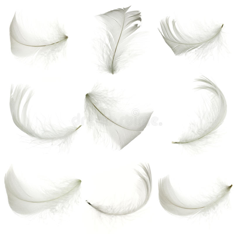 White feather. Set of white feather, isolated