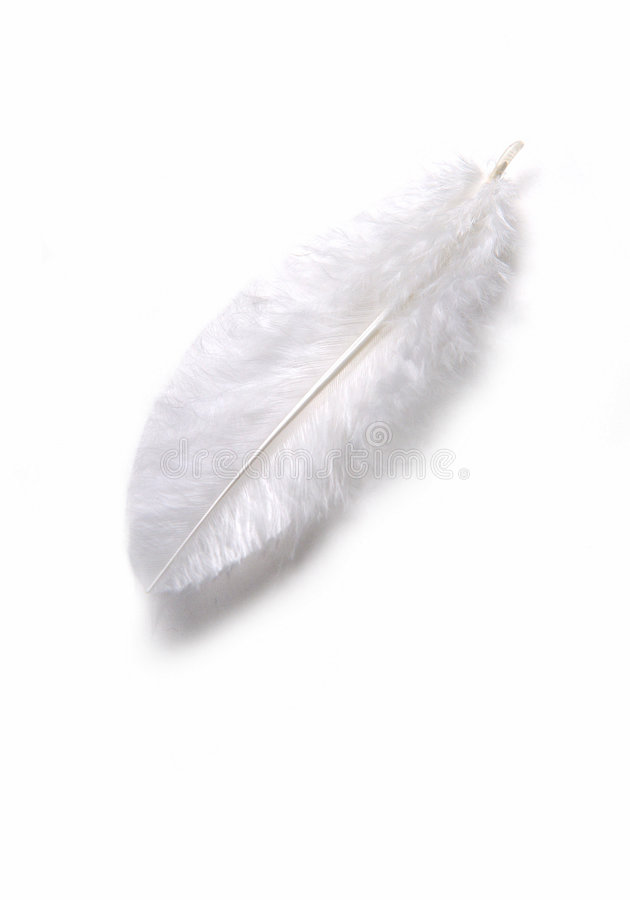 White feather stock photography