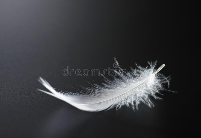 White feather stock photos