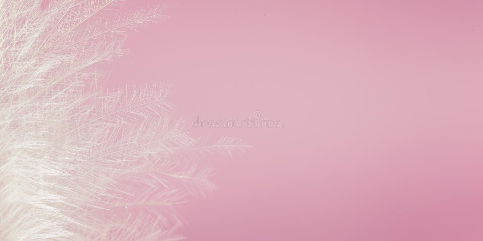 Download White Feather Of Bird On Pink Background Soft Vintage Color Texture Banner