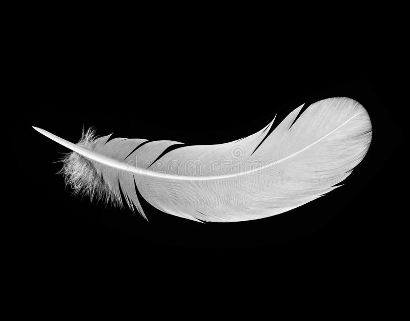 White feather on black. Background