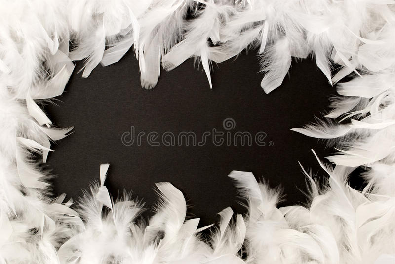 White feather border stock images