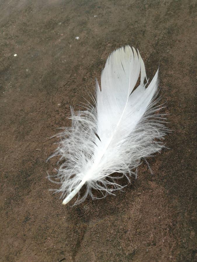 White feather royalty free stock photos