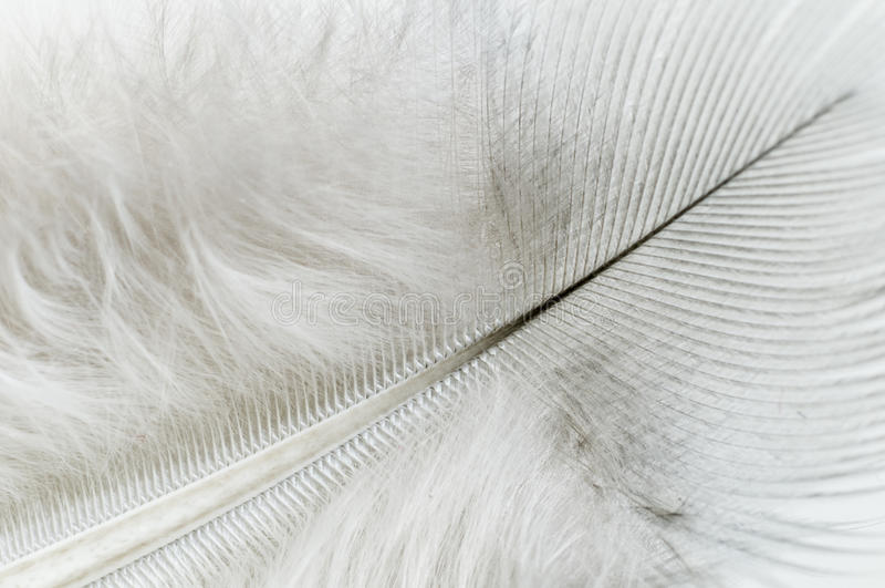 Download White feather close up stock image. Image of feather - 25393777