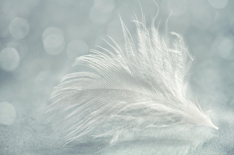 White feather close up. Abstract background stock photo