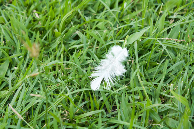 White Feather fall on green grass field. stock photography