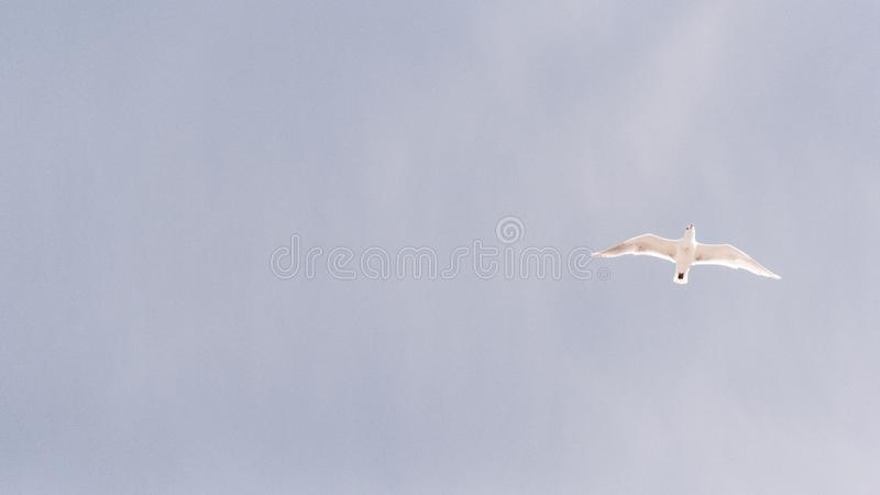White Feathered Bird Flying On Mid Air Free Public Domain Cc0 Image