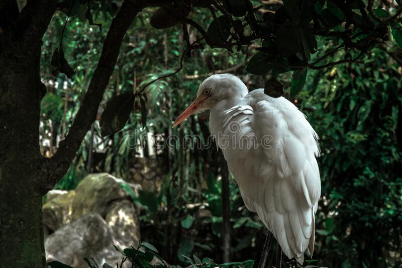 White Feathered Bird In Forest Free Public Domain Cc0 Image