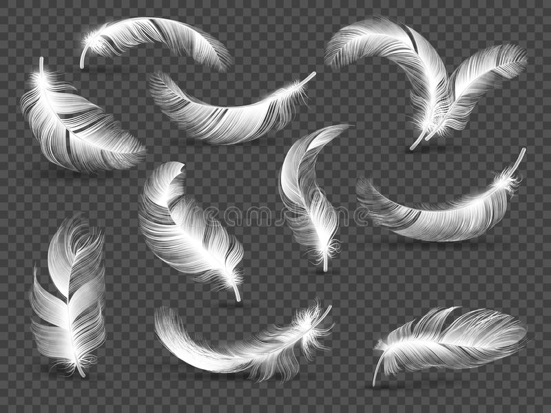 White feathers. Fluffy twirled feather isolated on transparent background. Realistic vector set royalty free illustration