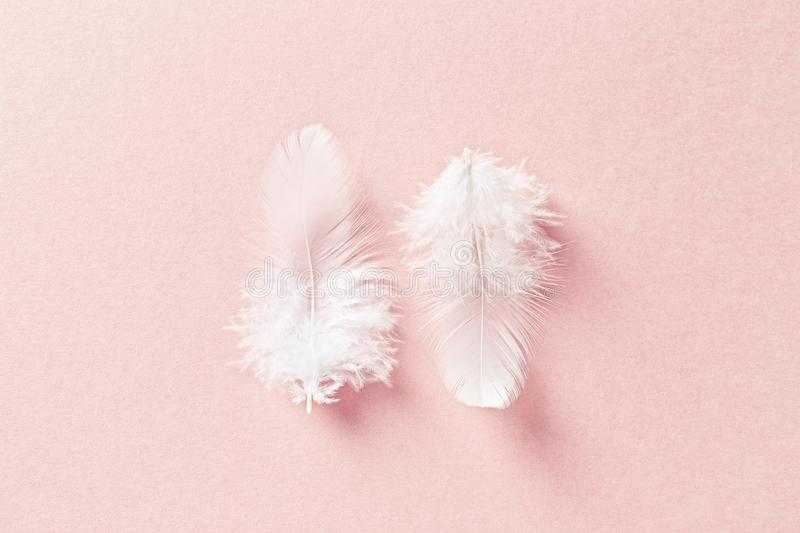 White feathers on pastel pink background royalty free stock photos