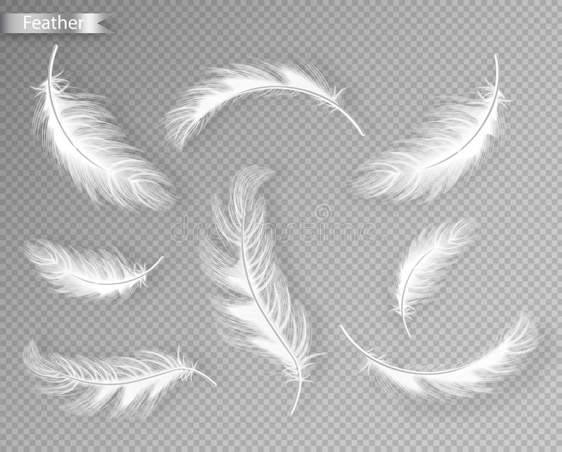 White feathers set collection Vector realistic. Different falling twirled feathers isolated on transparent background stock illustration