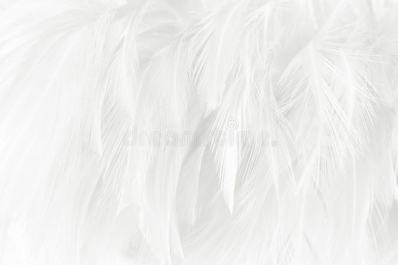 White feathers texture for background stock photos