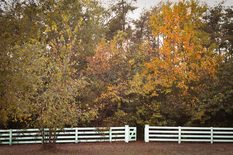 White Fence Fall Trees royalty free stock images