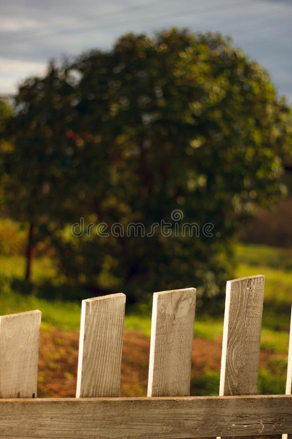 White fence and green hedge with tree royalty free stock image