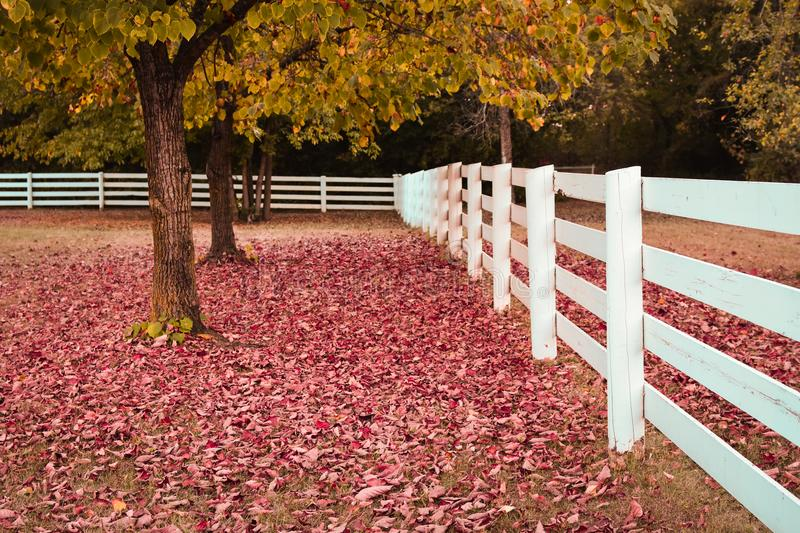 White Fence Fall Leaves royalty free stock photography