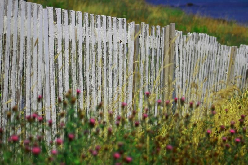 WHITE FENCE WITH WILD FLOWERS IN NEWFOUNDLAND. WHITE FENCE NEAR OCEAN WITH WILD FLOWERS IN NEWFOUNDLAND 2018 stock photo