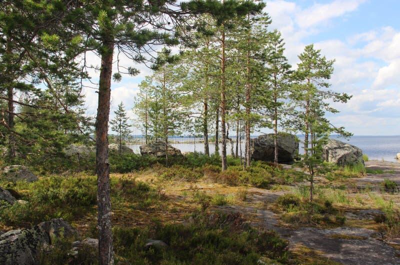 White Finnish nights, nature and lake. Karelia royalty free stock photos