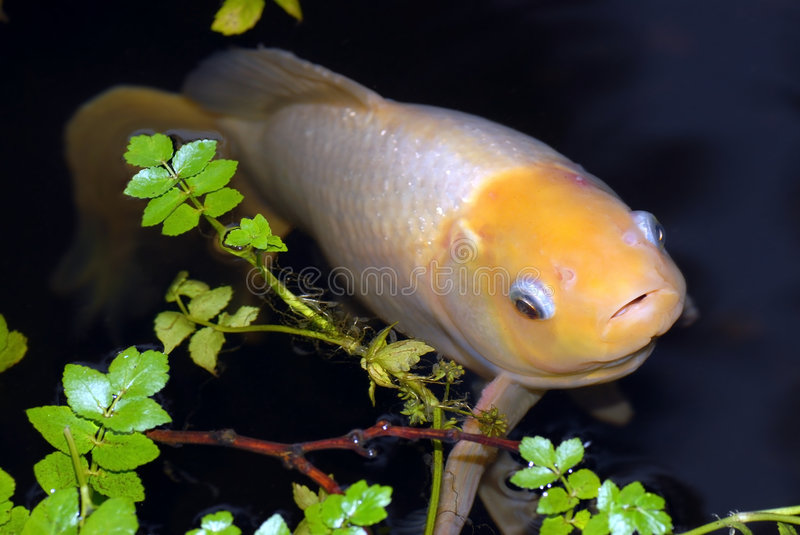 White fish stock images