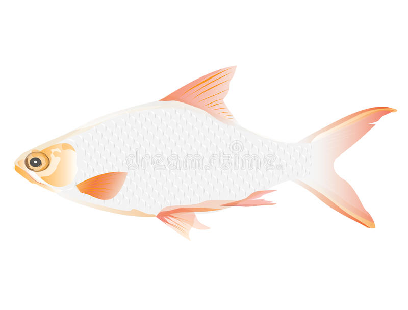 White fish stock illustration