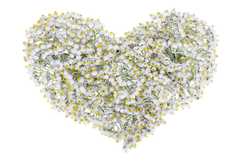 Download White floral heart stock image. Image of floral, concept - 26384195