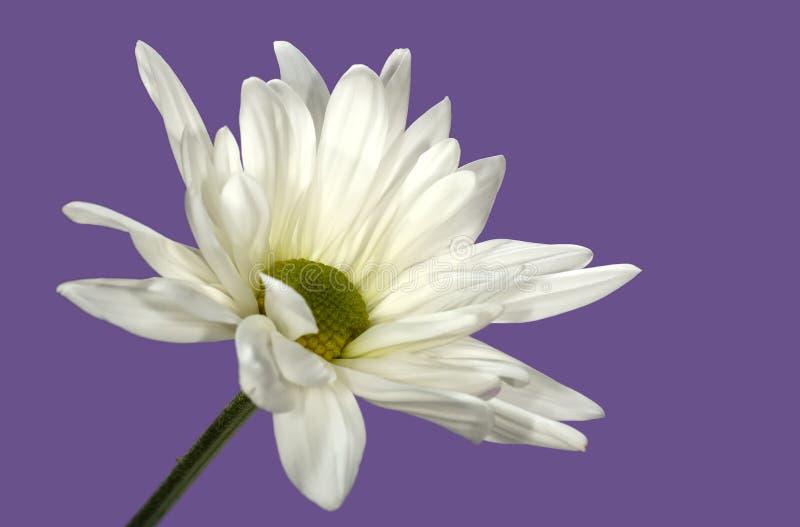 White Flower stock photos