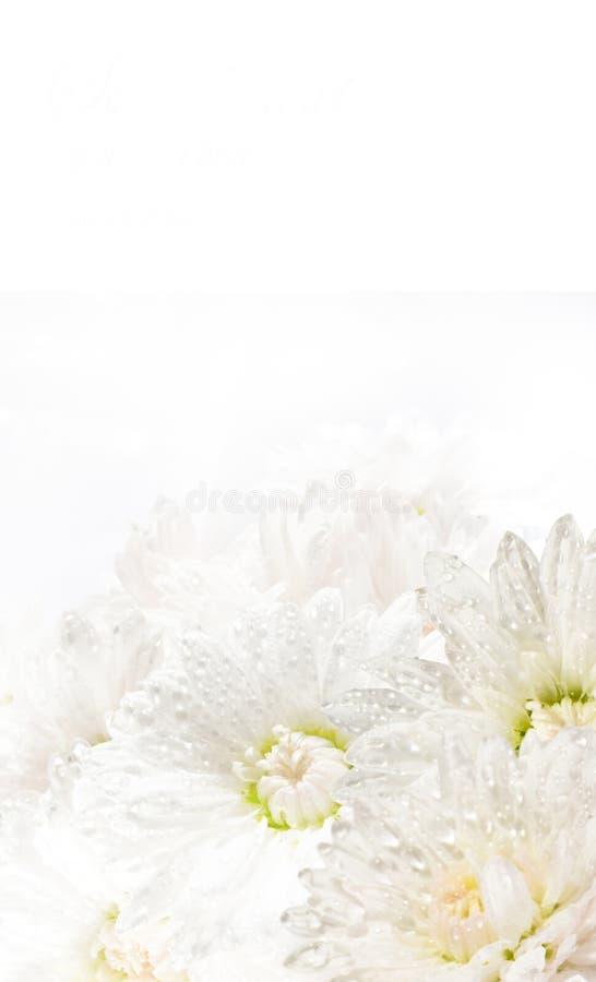Free White Flower Stock Image - 13311271