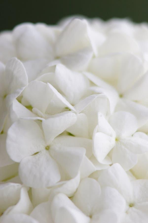 Download White flower stock image. Image of green, matte, leaf - 3507625