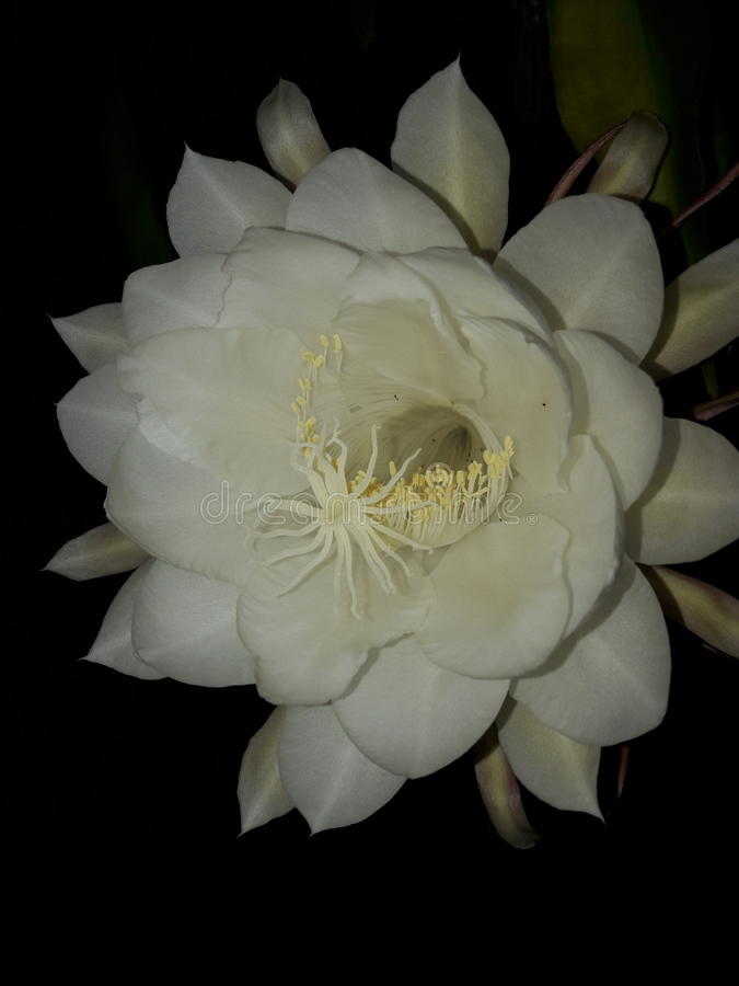 The White flower stock photo