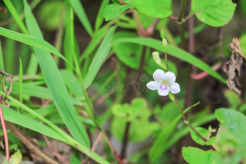 White flower bloom small on the grass beautiful abstract backgr. Ound stock photo
