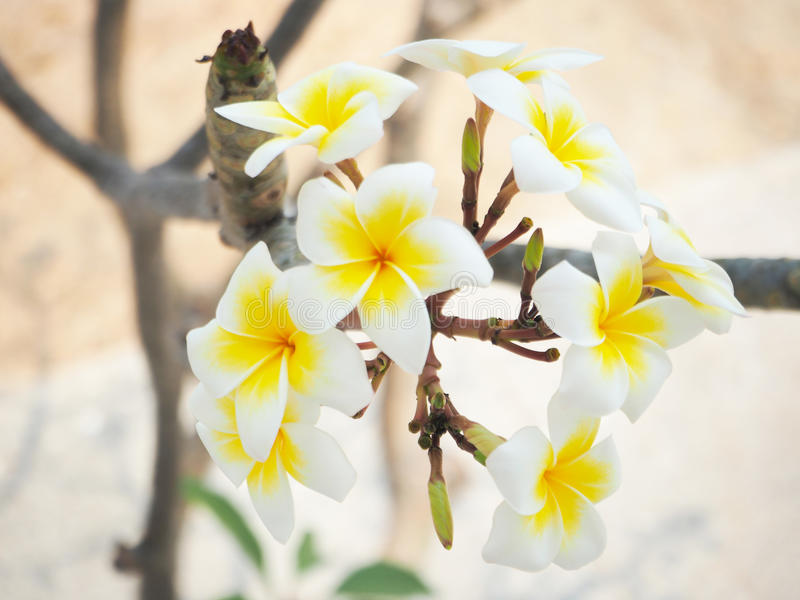 White flower blooming on sunny day stock images