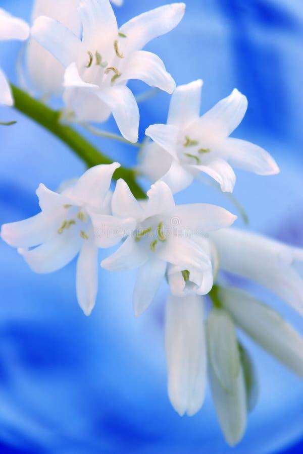 White Flower On Blue Background stock photo