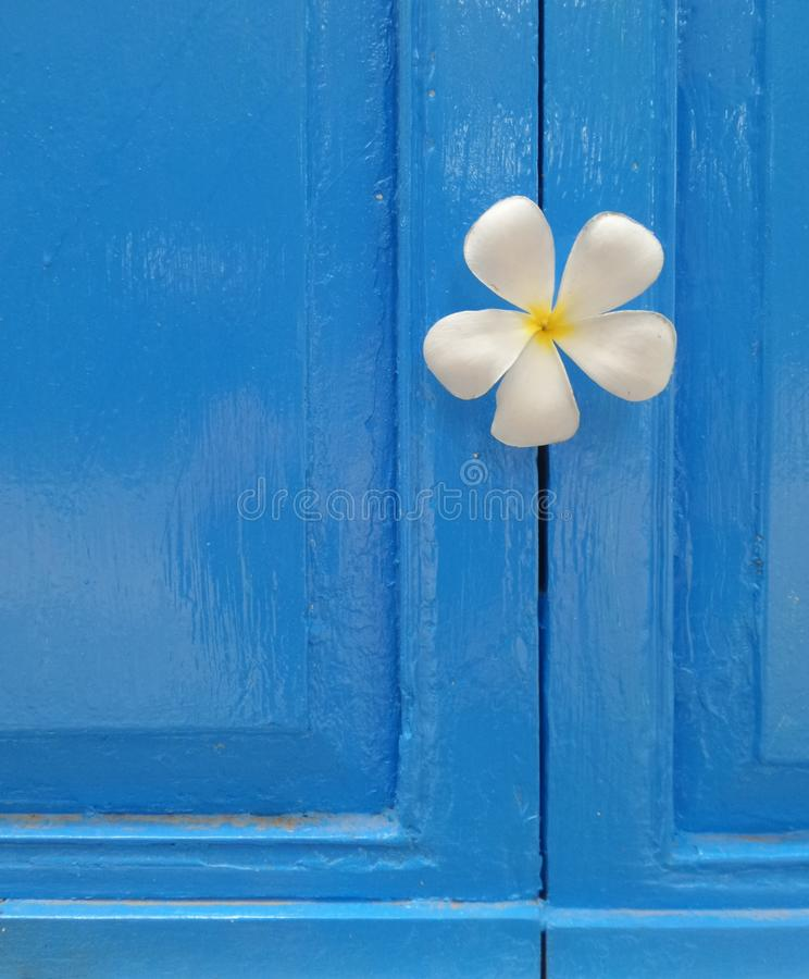 White flower on blue door next to the sea royalty free stock image