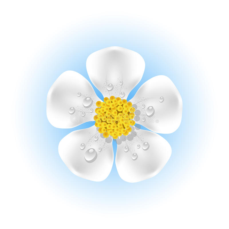 Download White Flower With Dew Drops Stock Vector - Image: 23665729