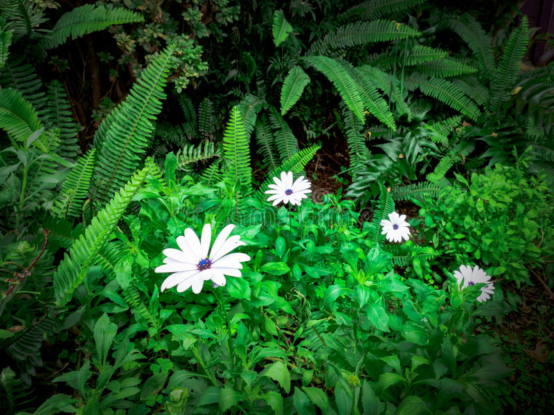 White Flower In Forest stock photos