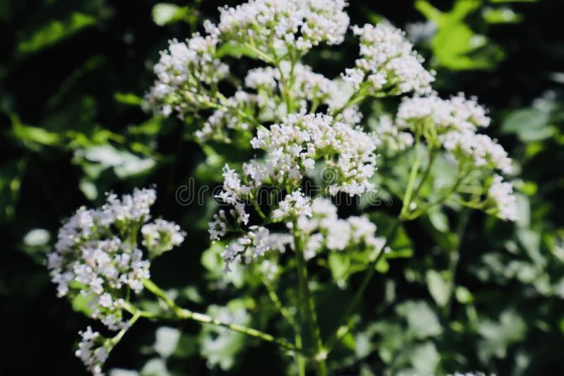 White flower garden beautiful stock photography