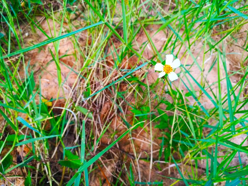 White flower on the grass. stock photography